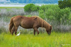 Big Horse and Small Bird (Thank you, my friends, Adam!) Tags: 微焦 微距 广角 广角镜头 单反 尼康 镜头 漂亮 adamzhang orlando lakemary nikkor standard lenses telephoto super closeup zoom ngc nikon dslr 长焦 长焦镜头 中佛州 野生动物 保护区 lens central florida wildlife macro flower beauty curve 不完美的美 flickrunitedaward 鲜花 美丽 color colorful colors 色彩 多姿 beautiful gorgeous world100f gallery fine art photography photographer excellent interesting explore fun nice unique horse wildhorse