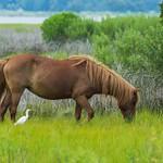 Big Horse and Small Bird thumbnail