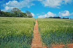 Photo of Farthing Common, Kent