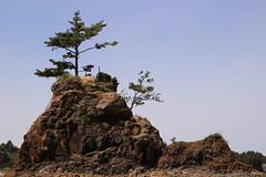 Siletz Bay Park, Lincoln City, Oregon (nikname) Tags: siletzbaypark lincolncity lincolncityoregon pacificnorthwestcoast pacificnorthwest pacificnorthwestbeaches rockybeaches beach usaparks oregonparks oregonbeaches treesonrocks trees
