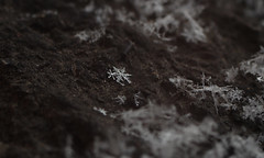 Big flake and baby flake (Яна Андреева) Tags: frozen ice macro macrophotography closeup closeupphotography frozenplant plant icyplant winter cold icecold snow snowflake snowflakephotography icephotography beauty beautiful beautyofnature wintercold