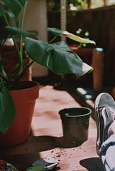 Batidora analógica VOL. III (Gatosaurio) Tags: love serious happy smile parelló wild wind hair eyes pez de ojo fisheye linda beautiful gorgeous pretty lips rubia blond chica mujer woman girl noche night loch lago lake winter invierno wave olas sand arena fumar cigarro chico hombre barba gafas glasses sunglasses hands smoke cigarette beard boy man bw blackandwhite white black backlight blue azul naranja orange españa valencia albufera agua water sunset atardecer crepúsculo twilight sun playa beach landscape paisaje pic foto photo
