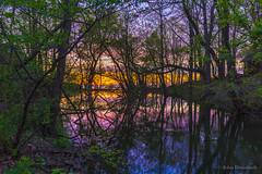 in the shadows (john dusseault) Tags: dusk sunset lakeontario trees water niagaraonthelake