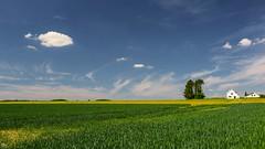Landscape 206 (YᗩSᗰIᘉᗴ HᗴᘉS +6 000 000 thx❀) Tags: clouds landscape grandleez belgium belgique green bélgica blue bluesky hensyasmine