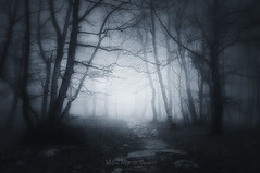 Camino incierto (Mimadeo) Tags: scary dark fog night forest lost path fear horror mood monochrome landscape magic tree nightmare shadow light evening nature mystery mist spooky foggy darkness misty halloween woods evil creepy fantasy gothic mysterious surreal silhouette enchanted ghost atmosphere moonlight bare haunted eerie black white blackandwhite