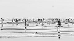 Clam Season (DL Photo) Tags: landscape beach oregon gearhart razorclams clamdiggers