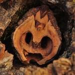 Nature's Mask - Macro Monday (Explored) thumbnail