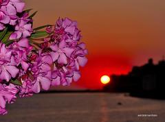Sunset By Diamante Cs (Arcieri Saverio) Tags: sunset diamante cs tramonto nikon mare calabria tramonti italia red rosso rouge sky sun sole travel flowers nature flash fiori