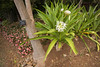 Madeira (Pieter Mooij) Tags: funchal madeira portugal pt foguete