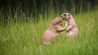 One way kiss.