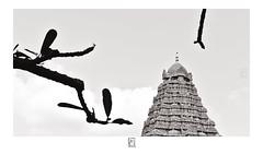 Vimana - Gangai Konda Chozhapuram (krishartsphotography) Tags: krishnansrinivasan krishnan srinivasan krish arts photography fineart monochrome ancient architecture temple vimana gangai konda chozhapuram gangaikondachozhapuram brihadeeswarar ariyalur tamilnadu india