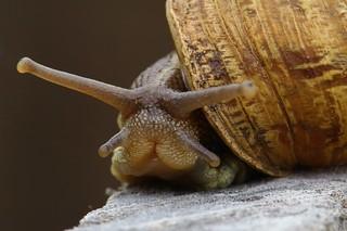 Happy Snail Saturday!