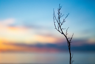 Beach Weeds in Silhouette