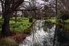 Reflections (Jocey K) Tags: southisland newzealand nikond750 christchurch monavale flowers daffodils gardens trees river avon avonriver sky