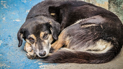 12junho_-13 (Laércio Souza) Tags: laerciosouza cachorros rolesp saopaulo periferia chaveiro igreja templo brasil