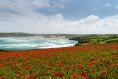 Over the Poppies (richardsolway) Tags: poppies nature crantock beach sea ocean waves flowers coast newquay cornwall