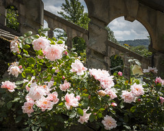 Haddon Hall (TheDavePhotoAlbum) Tags: haddon hall medieval tudor stately home bakewell derbyshire garden flower roses steps