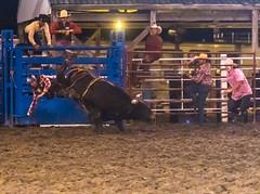 DSC_4383-Edit-Edit (alan.forshee) Tags: rodeo horse cow ride fall buck spin twirl bull stallion boy girl barrel rope lariat mud dirt hat sombrero