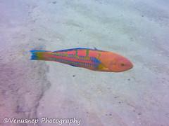 Hanauma Bay 11 (venusnep) Tags: hanaumabay hanauma bay underwater tropicalfish tropical fish iphone watershot watershotpro hawaii snorkeling travel travelphotography may 2018