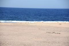 DSC_0103 (russellfenton) Tags: egypt marsaalam nikon nikon7200 7200 corayabeach steigenberger snorkelling sea boat