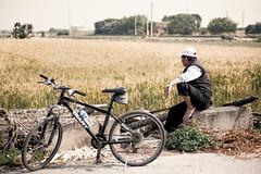 我的父親,看天吃飯的老農民 (張麗芬) Tags: 麥田 鄉下 農田 腳踏車 彰化縣 大城鄉