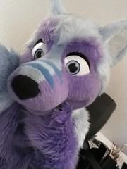 Being #cute x3 #FursuitFriday ☺️ (Keenora Fluffball) Tags: keenora fursuit furry kee