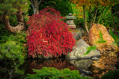 Japanese Gardens, Hobart, Tasmania (RodShot) Tags: gardens landscape water botanical red green trees leaves autmn
