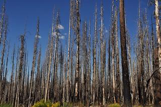 Forest Fire Damage, Lassen Volcanic National Park