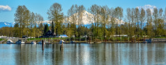 Pitt River/Pitt Meadows Marina/Mt. Baker (SonjaPetersonPh♡tography) Tags: portcoquitlam ptcoq poco britishcolumbia tramboulaypocotrail canada nikon nikond5200 traboulaypocotrail trail path cycling walking hiking scenic viewpoints mountains dykes pittriver metrovancouver views river shoreline riverbank pittmeadowsmarina boats mtbaker nature birds boating
