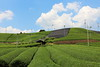 Japanese tea field (Teruhide Tomori) Tags: teafield kyoto japan wazuka japanesetea green leaves mountain hill landscape traditional field japon 日本茶 京都 茶畑 緑 日本 和束町 茶葉 風景 緑茶 greentea uji 宇治茶 sky