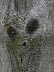 Pareidolia. Scream! (Different Aspects) Tags: macromondays pareidolia scream
