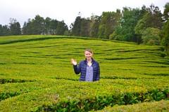 hi! (ekelly80) Tags: azores portugal sãomiguel may2017 teaplantation tea greentea chágorreana green rows tealeaves leaves field