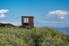 Orlock Lookout (Eskling) Tags: lookout orlock codown northern ireland ww2 wwii second world war flowers rapeseed coast sea sky clouds blue