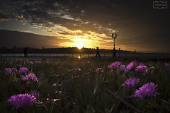 Bendecidos por el sol/ Blessed by the sun (Jose Antonio. 62) Tags: spain españa asturias gijón flowers flores backlight contraluz dusk puestadesol clouds nubes