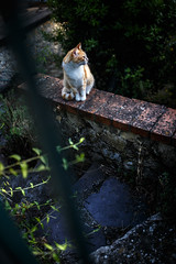 On the edge (Marco Giometti) Tags: prison shadow light old gatto cat montemarcello liguria italia it