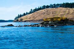 DSC_6023 (whibbles) Tags: washington pnw mountains seattle hiking rattlesnakeledge orcas whales orcasisland eagles wildlife