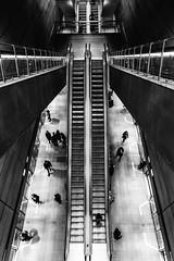 All the Ants ... (Thomas Listl) Tags: thomaslistl blackandwhite noiretblanc biancoenegro copenhagen denmark trainstation stairs staircases urban 24mm wideangle graphical geometry silver life