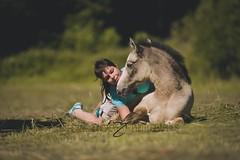 Harow de Cramary (morganegoncalvesphotographies) Tags: horse poulain poulain2017 foal buckskin isabelle tendresse calins horsephotography