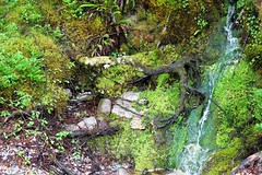 A wee waterfall. (artanglerPD) Tags: wee waterfall side loch maree mosses roots branches stones