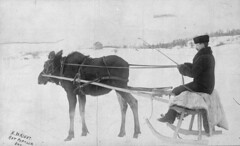 A moose pulling a sleigh, Rat Portage, Ontario, H. Wright / Orignal tirant un traineau, Rat Portage (Ontario), H. Wright (BiblioArchives / LibraryArchives) Tags: lac bac libraryandarchivescanada bibliothèqueetarchivescanada canada canada150 moose orignal sleigh traineau ratportage ontario winter hiver man homme hjwoodside hwright kenora