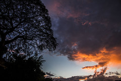 Saman al atardecer.  Caracas.  Venezuela (fedelea1962) Tags: sunset sky venezuela caracas