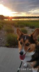 May 31, 2017 - Yuma enjoys a gorgeous Colorado evening. (Lisa Canfield)
