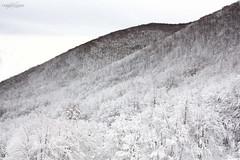 """Gelo"" (fabiokai) Tags: inverno freddo winter cold ice ghiaccio neve snow abruzzo italia italy forest white alberi sky cielo nature canon natural trekking mountains"