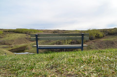 Bench Overlooking Nose Hill (pokoroto) Tags: bench overlooking nose hill calgary カルガリー アルバータ州 alberta canada カナダ 5月 五月 早月 gogatsu satsuki fastmonth 2017 平成29年 summer may