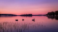 Early morning at the lake (claudiaulrikegoodall) Tags: