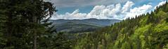 Blick über den Schwarzwald bei St. Blasien