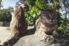 cats (B. Rad) Tags: cat cats straycat k5 16mm fisheye hdr zenitar16mmf28 bracketing wide angle