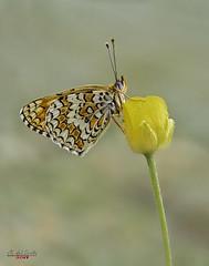 Festival floral (gatomotero) Tags: olympusomdem1 mzuiko60 mariposa flor ambiente nature campo focusbracketing naranjas butterfly lepidopteros