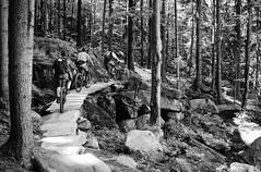 climb (Hagbard_) Tags: bike mtb mountainbike trailbike ride enduro czech rychleby sport tour outdoor outside trailriding wood fun life friends beautiful mtbisokay nature photography rychlebskéstezky