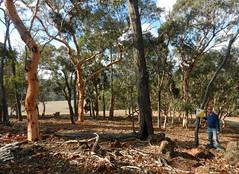Found the control (LeelooDallas) Tags: western australia bannister landscape tree forest eucalyptus steve bush sky cloud dana iwachow nikon s9200